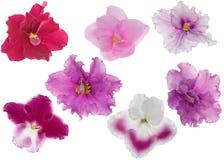 Fleurs violettes rouges et roses réglées Images libres de droits
