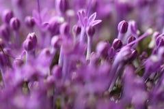 Fleurs violettes sur le fond brouillé avec le boke Images stock
