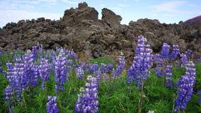 Fleurs volcaniques Image libre de droits