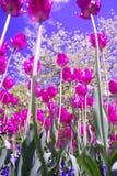 Fleurs voyantes photo libre de droits