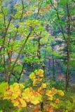 Fleuve 8 de Vanchin Photographie stock libre de droits