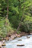 Fleuve avec des arbres Photographie stock libre de droits