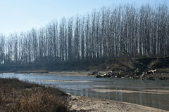 Fleuve avec des arbres Image libre de droits