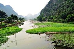 Fleuve avec le lis d'eau et la plante verte Image libre de droits