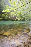 fleuve calme image libre de droits