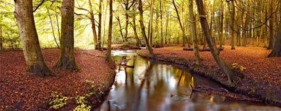 Fleuve calme d'automne images libres de droits