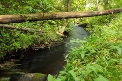 Fleuve circulant dans la forêt Images stock