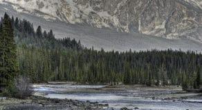 Fleuve d'Athabasca, stationnement national de jaspe, Canada Images stock