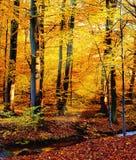 Fleuve d'automne Photos libres de droits