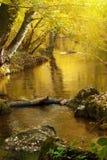 Fleuve d'automne images libres de droits