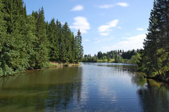 fleuve d'horizontal de forêt photos libres de droits