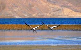 fleuve d'oiseaux Photo stock