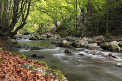 Fleuve dans la forêt photos libres de droits