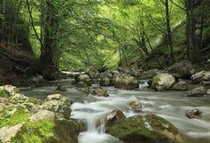 Fleuve dans la forêt Image stock