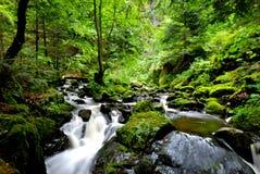 Fleuve dans la forêt Image libre de droits