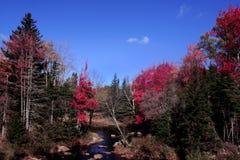Fleuve dans la forêt d'automne Photos libres de droits