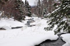 Fleuve dans la forêt neigeuse Photo libre de droits