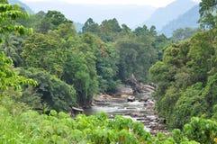 Fleuve dans la jungle Photos libres de droits