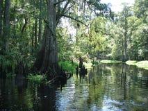 Fleuve dans les jungles Image stock