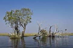 Fleuve de Chobe Images libres de droits