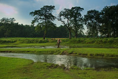 Fleuve de croisement d'éléphant et de curseur au Népal Photos libres de droits