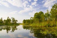 Fleuve de forêt Images libres de droits