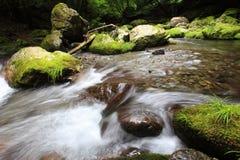 Fleuve de forêt Image libre de droits