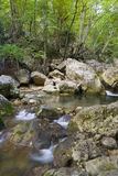 fleuve de forêt Photo libre de droits