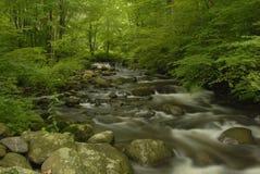 Fleuve de forêt images stock