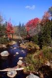 Fleuve de forêt au Maine Photo stock