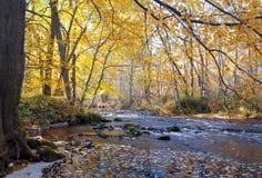 fleuve de forêt d'automne Photographie stock