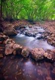 Fleuve de forêt de montagne Photos libres de droits