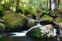 Fleuve de forêt humide Images stock