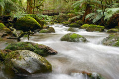 Fleuve de forêt humide Image stock