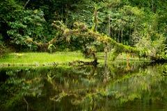 Fleuve de forêt humide avec le feuillage et l'arbre Photo stock