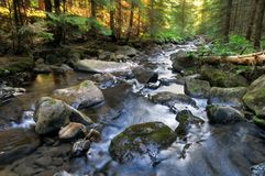 Fleuve de forêt le matin image libre de droits