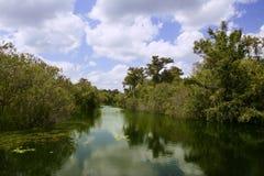 Fleuve de Mangroove dans les marais la Floride Images libres de droits