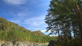 Fleuve de montagne Montagne Altai banque de vidéos