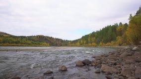 Fleuve de montagne Montagne Altai Automne banque de vidéos