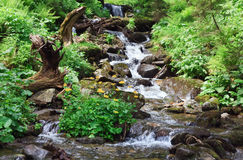 Fleuve de montagne d'été photographie stock