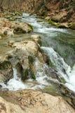 Fleuve de montagne dans la forêt Image libre de droits