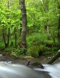 Fleuve en forêt d'été Photo libre de droits