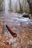 Fleuve en jour brumeux Images stock