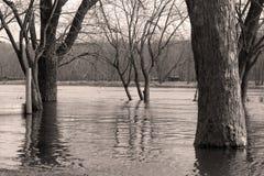 Fleuve et arbres noirs et blancs Photos libres de droits