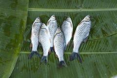 fleuve frais de poissons Image stock