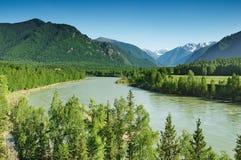 Fleuve Katun de montagne Photographie stock libre de droits