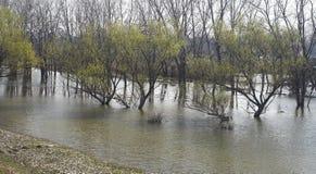Fleuve neuf près de vieux fleuve Photos libres de droits
