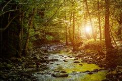 Fleuve profondément dans la forêt de montagne photo libre de droits