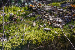 Fleuve profondément dans la forêt de montagne photos stock