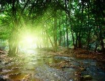 fleuve profond de forêt image stock